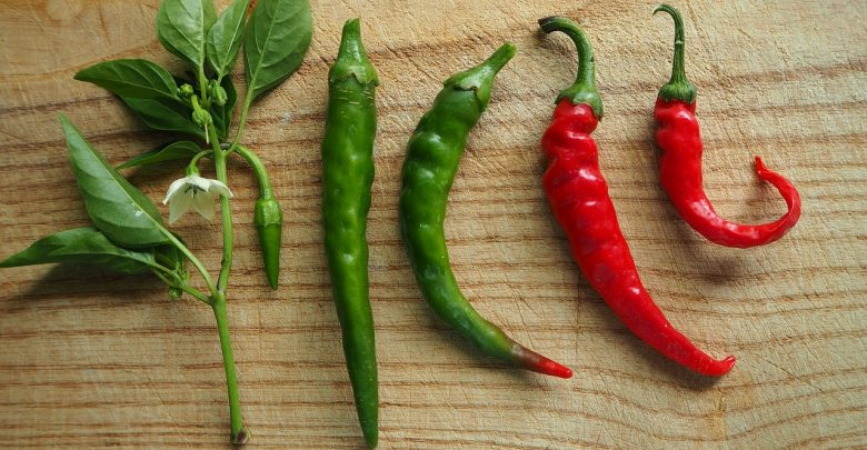 chili, chili peppers
